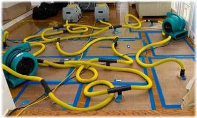 carpet cleaning hoses Lynnwood WA