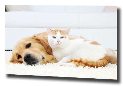 pet odor cleaning services Lynnwood WA