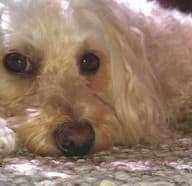 Carpet Preservation Tips for Dog Owners