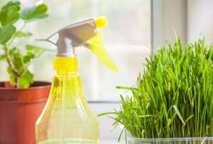 Benefits of Using a Green Carpet Cleaner