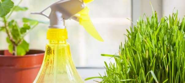Homemade Green Mold and Mildew Cleaners