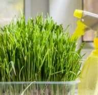 Green Home Sanitizing Alternatives