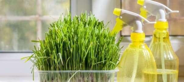 Green Home Sanitizing Alternatives