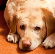 Homemade Carpet Cleaners for Pet Stains