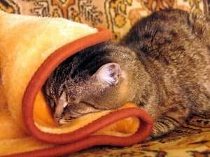 Moisture Resistant Carpet Padding