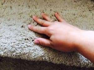 Wet Carpet After a Professional Cleaning?