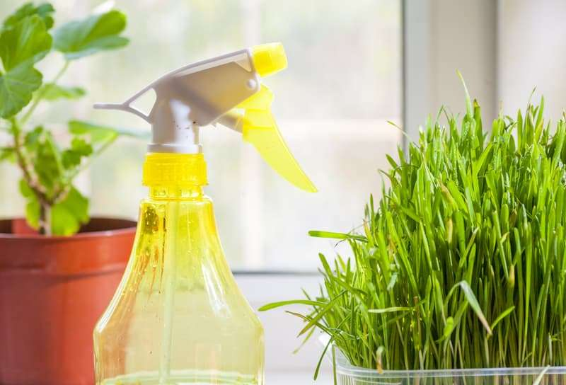 Myths About Green Cleaning