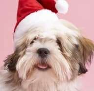 Freeing Your Home From Pet Odor This Holiday Season