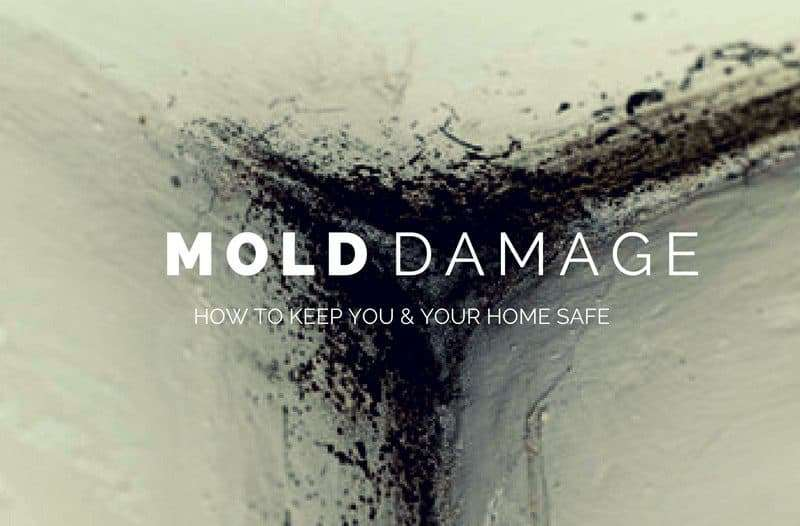 Possible Signs of Mold in Your Home
