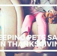 Keep Pets Safe and Carpet Clean This Thankgiving