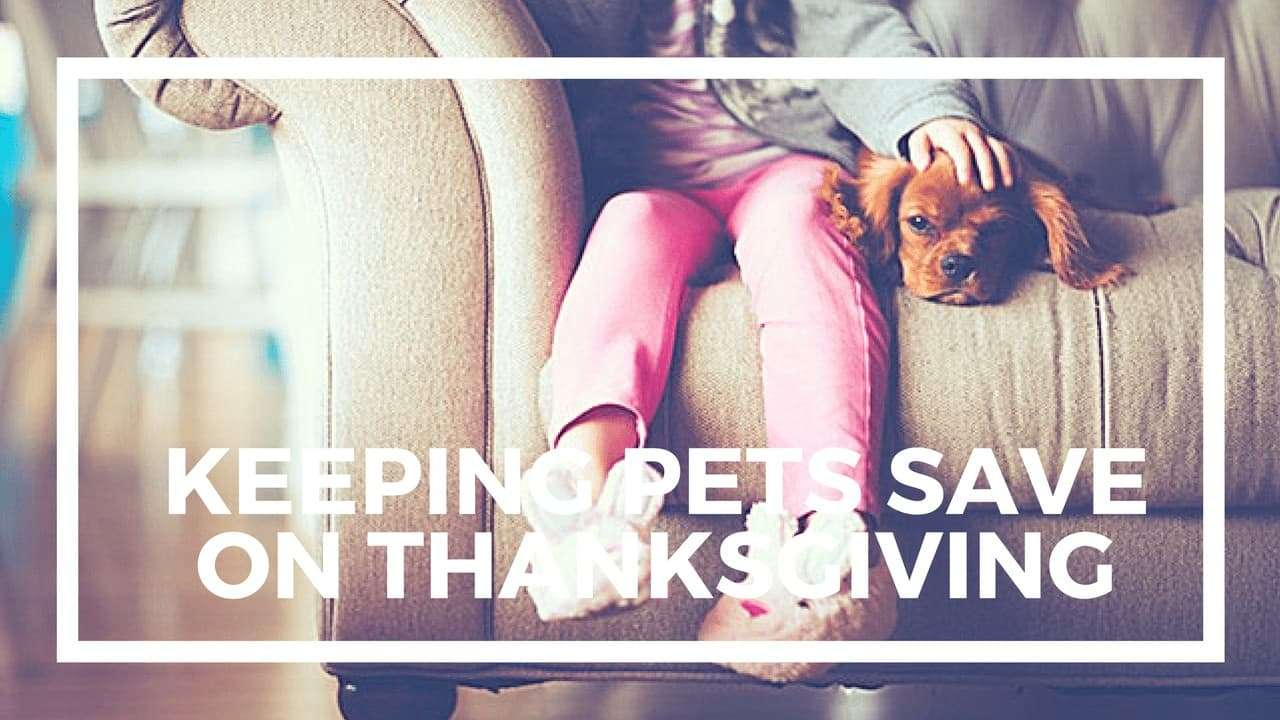 Keep Pets Safe and Carpet Clean This Thanksgiving - Seattle Cleaning Company