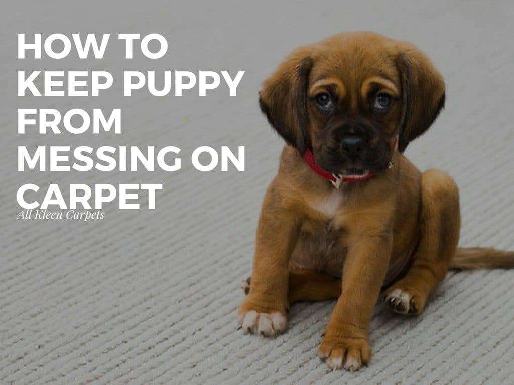 Repellents to Prevent Puppy From Peeing on Carpet