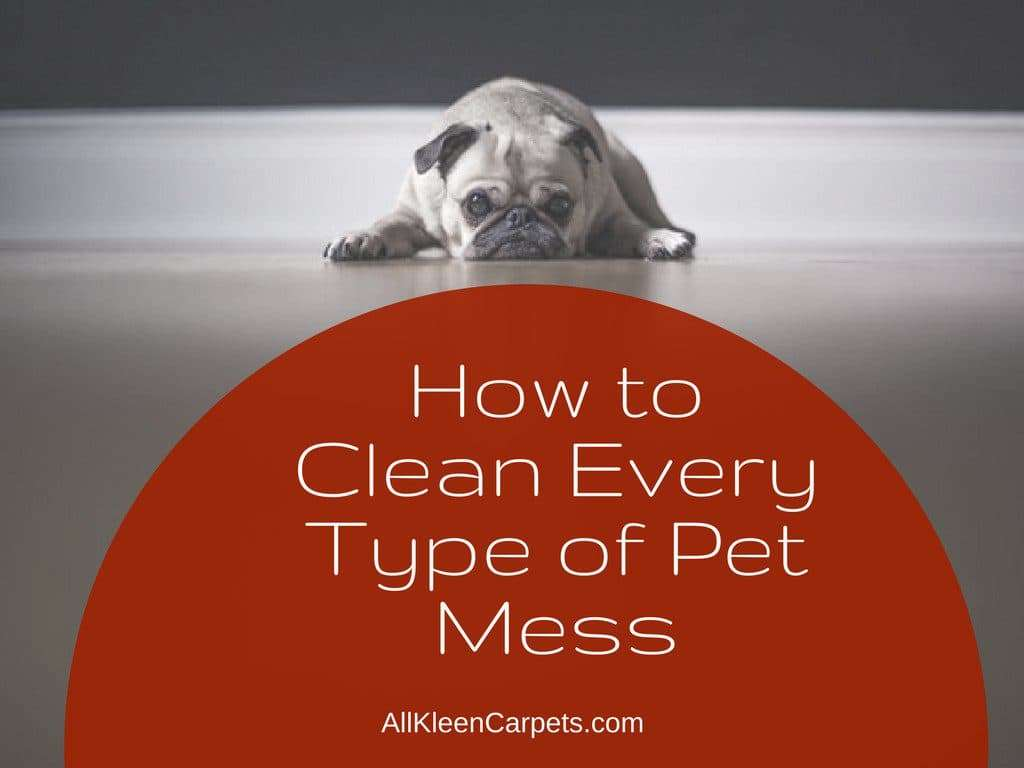 How to Easily Clean Up Pet Messes
