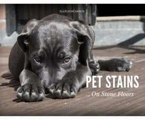 How to Clean Pet Stains on Stone Floors