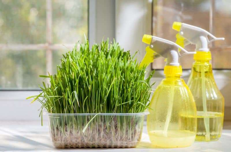 Household Cleaning Products You Have in Your Pantry