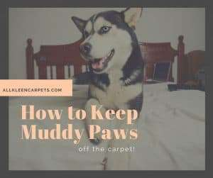 How to Keep Muddy Paw Prints off the Carpet
