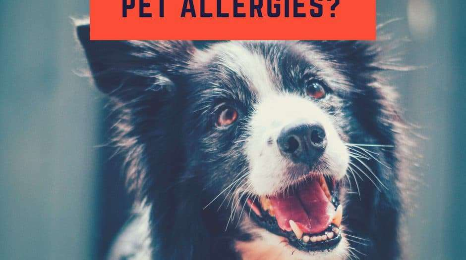How Can You Help Prevent Pet Allergies