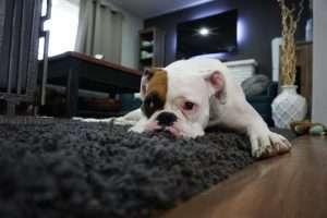How to Care for Your Carpet Like an Expert