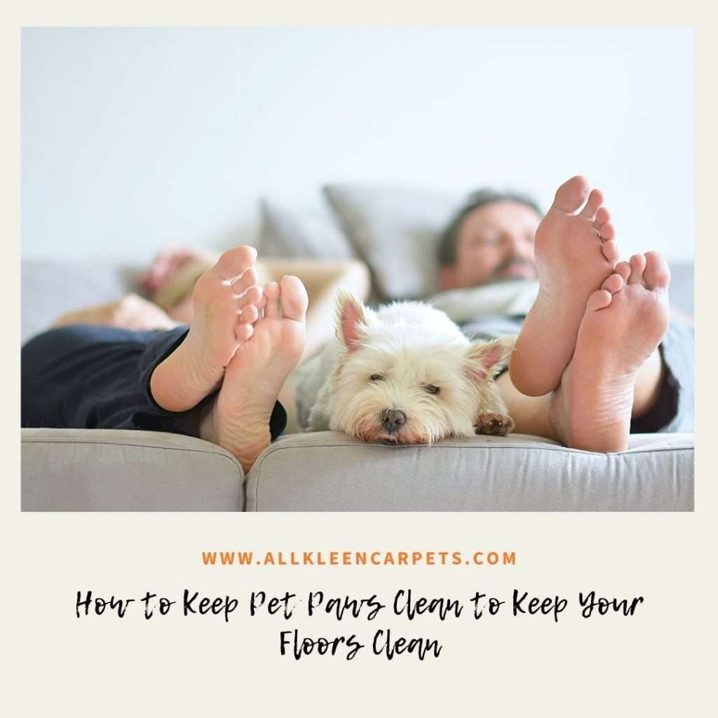 How to Keep Pet Paws Clean to Keep Your Floors Clean